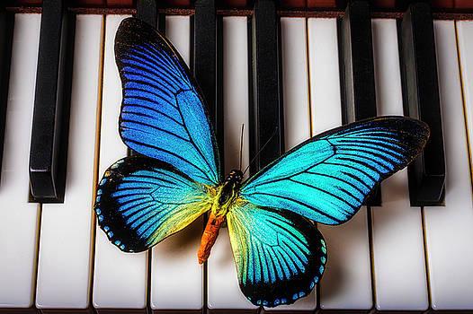 Wonderful Blue Butterfly On Keys by Garry Gay