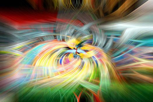 Wonderful Chaos by Steve ODonnell