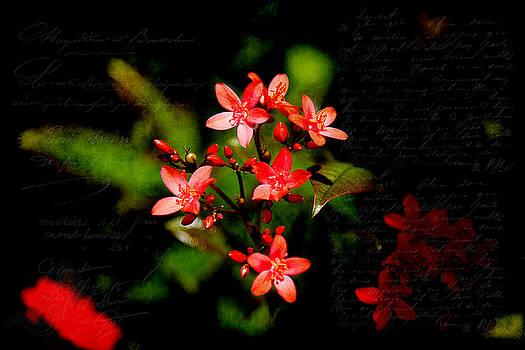 Milena Ilieva - Wonderful Colors