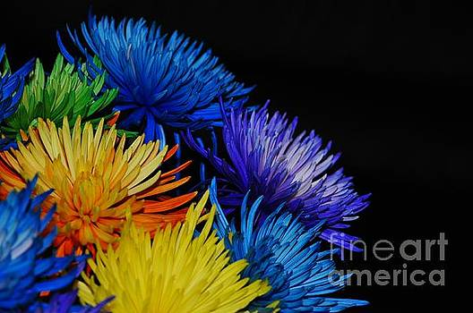 Wonderful Colors of Life. Enjoy Each Colors of Life, Inspirational Image by Akshay Thaker