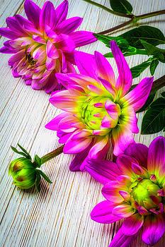 Wonderful Pink Dahlias by Garry Gay