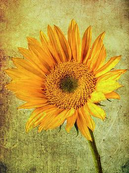 Wonderful Textured Sunflower by Garry Gay
