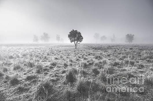 Wondrous misty background by Jorgo Photography - Wall Art Gallery