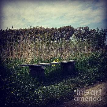 Wood Bench and Yellow Flowers by Frank J Casella