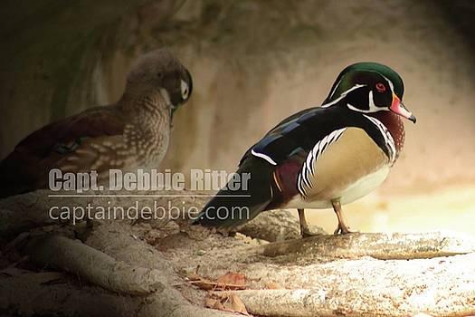 Wood Duck 5786 by Captain Debbie Ritter