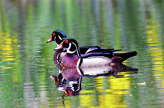 Kathy Kelly - Wood Duck Bookends