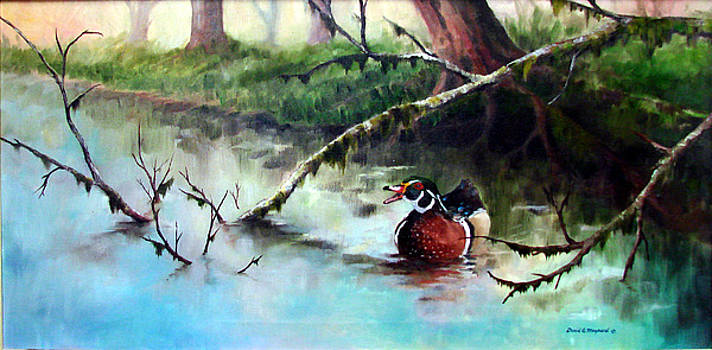 Wood Duck by David  Maynard