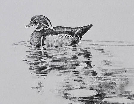 Wood Duck  by Jim Young