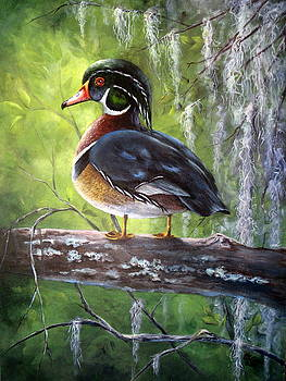 Wood Duck by Mary McCullah