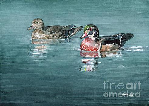 Wood Ducks by Steve Hamlin