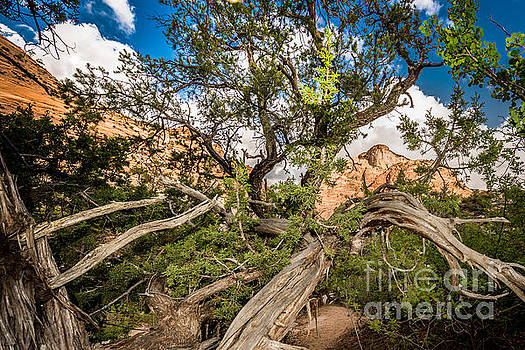 Wood Frame at Zion by Jim DeLillo