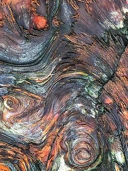 Wood Grain by Bonnie Bruno