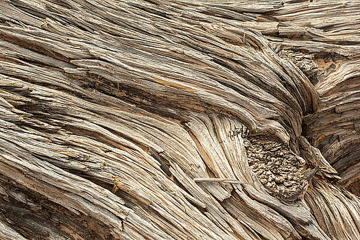 Wood Knot by Peter J Sucy