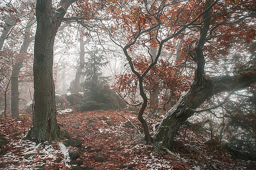 Jenny Rainbow - Wood Mystery