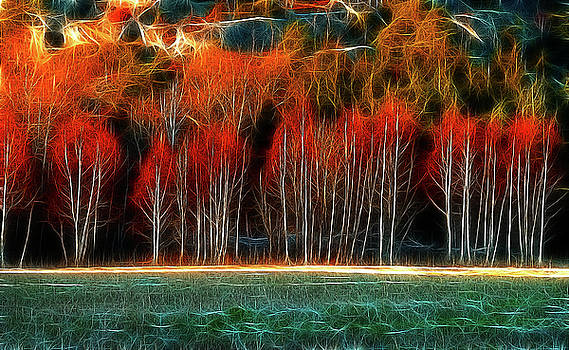 Wood on fire by Paolo Bruno