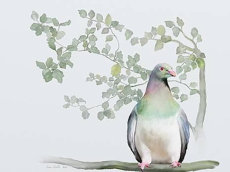 Wood Pigeon by Ivana Westin