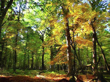 Wood Plank Trail by Cedric Hampton