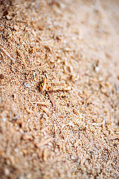 Eduardo Huelin - Wood Sawdust Macro Texture Background