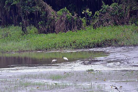 Harvey Barrison - Wood Stork with Great Egret