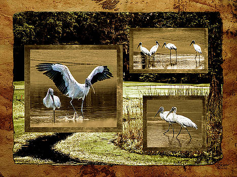 Wood Storks of Oak Grove Island by Jim Ziemer