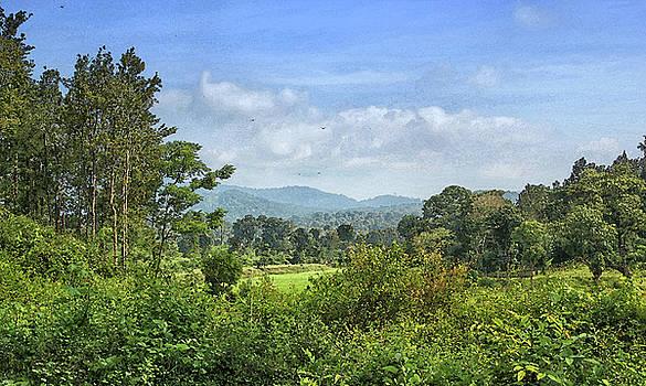 Wooded Landscape by Sandeep Gangadharan