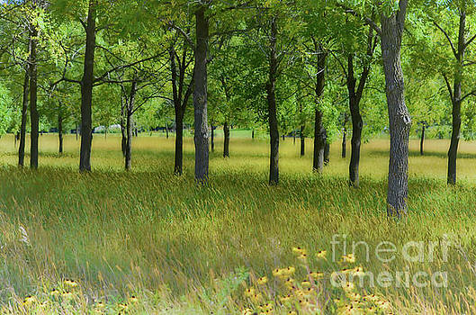 Wooded Meadow by Deb Halloran