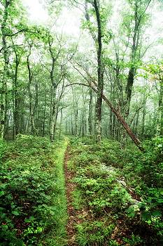 Wooded Trail by Alan Raasch