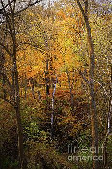 Wooded Wonderland by Deb Halloran