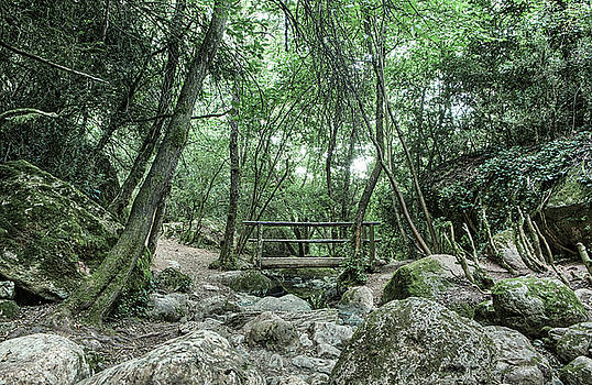 Wooden Bridge in Riera de Martinet by Marc Garrido