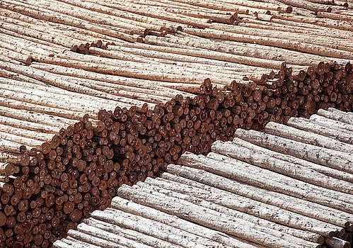 Ramunas Bruzas - Wooden Business