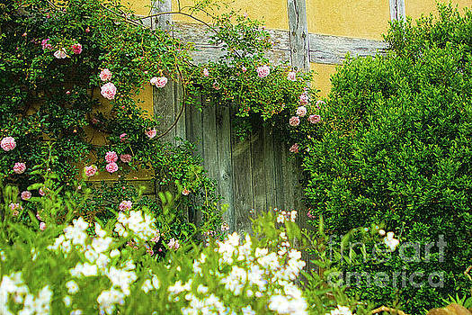 Wooden Door Climbing Roses Secret Garden by Beverly Claire Kaiya