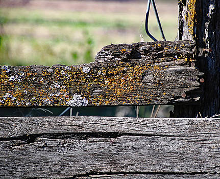 Wooden Fence by Paula Anderson
