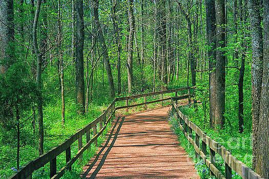 Wooden Path by Geraldine DeBoer