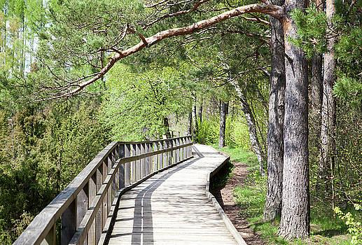 Ramunas Bruzas - Wooden Path