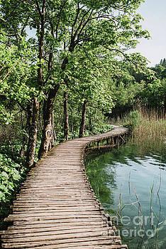Wooden path by Viktor Pravdica