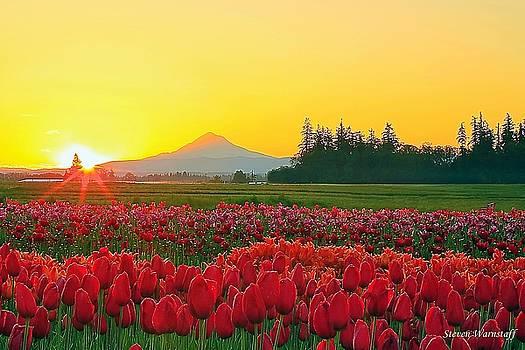 Wooden Shoe Tulip Fields Sunrise by Steve Warnstaff