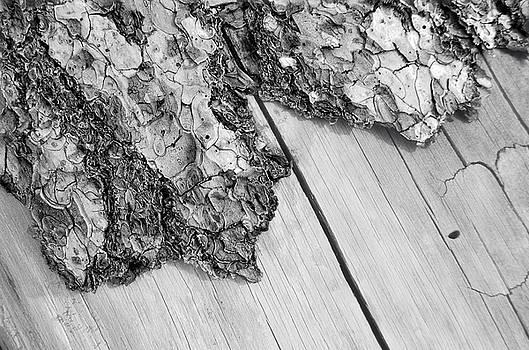 Donna Blackhall - Wooden Wave