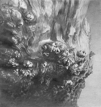 Woodknob  by Denis Chernov