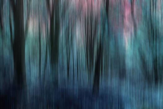 Woodland Abstract 1 by David Pringle