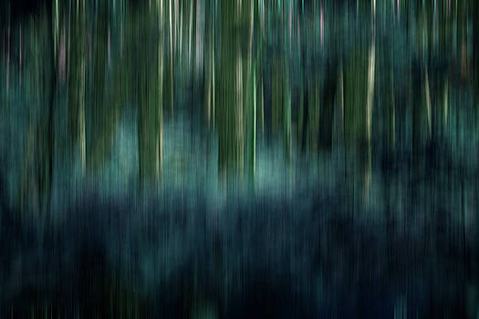 Woodland Abstract 2 by David Pringle