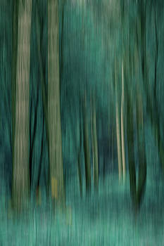 Woodland Abstract 3 by David Pringle