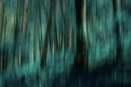 Woodland Abstract 4 by David Pringle