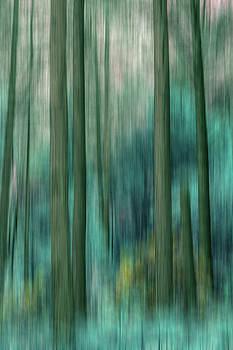 Woodland Abstract 5 by David Pringle