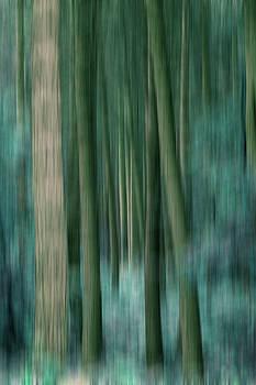 Woodland Abstract 6 by David Pringle