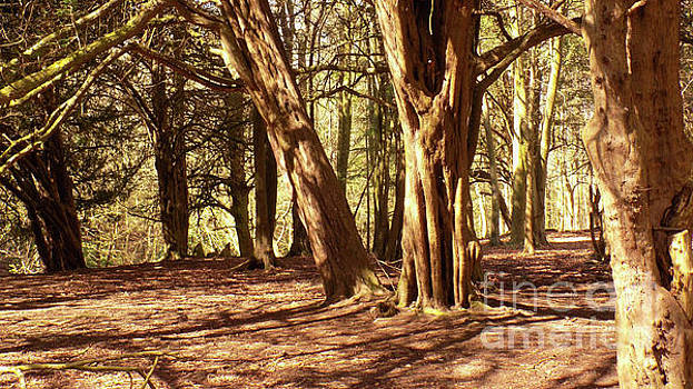 Woodland Clearing in Sun by Mike O'Hagan