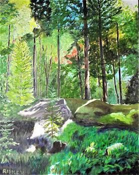 Woodland Fantasy by Jack Riddle
