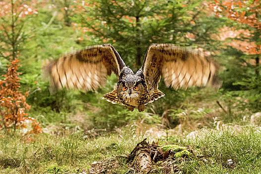 Woodland flight by David Hare