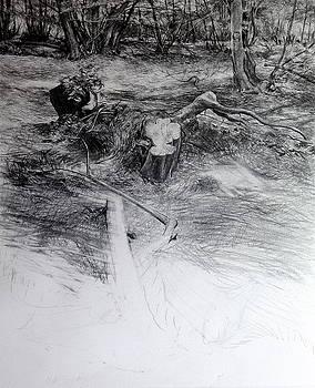 Harry Robertson - Woodland