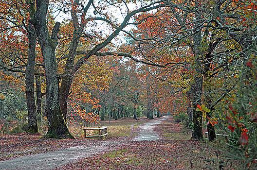 Woodland in Autumn by Bishopston Fine Art
