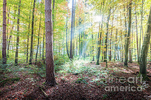 Woodland In Fall by Hannes Cmarits